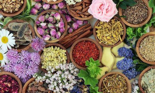 plantas medicinales para vista